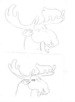 Studies for the Moose head...